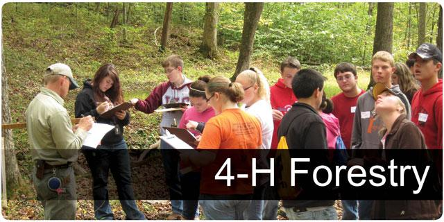 4H Forestry