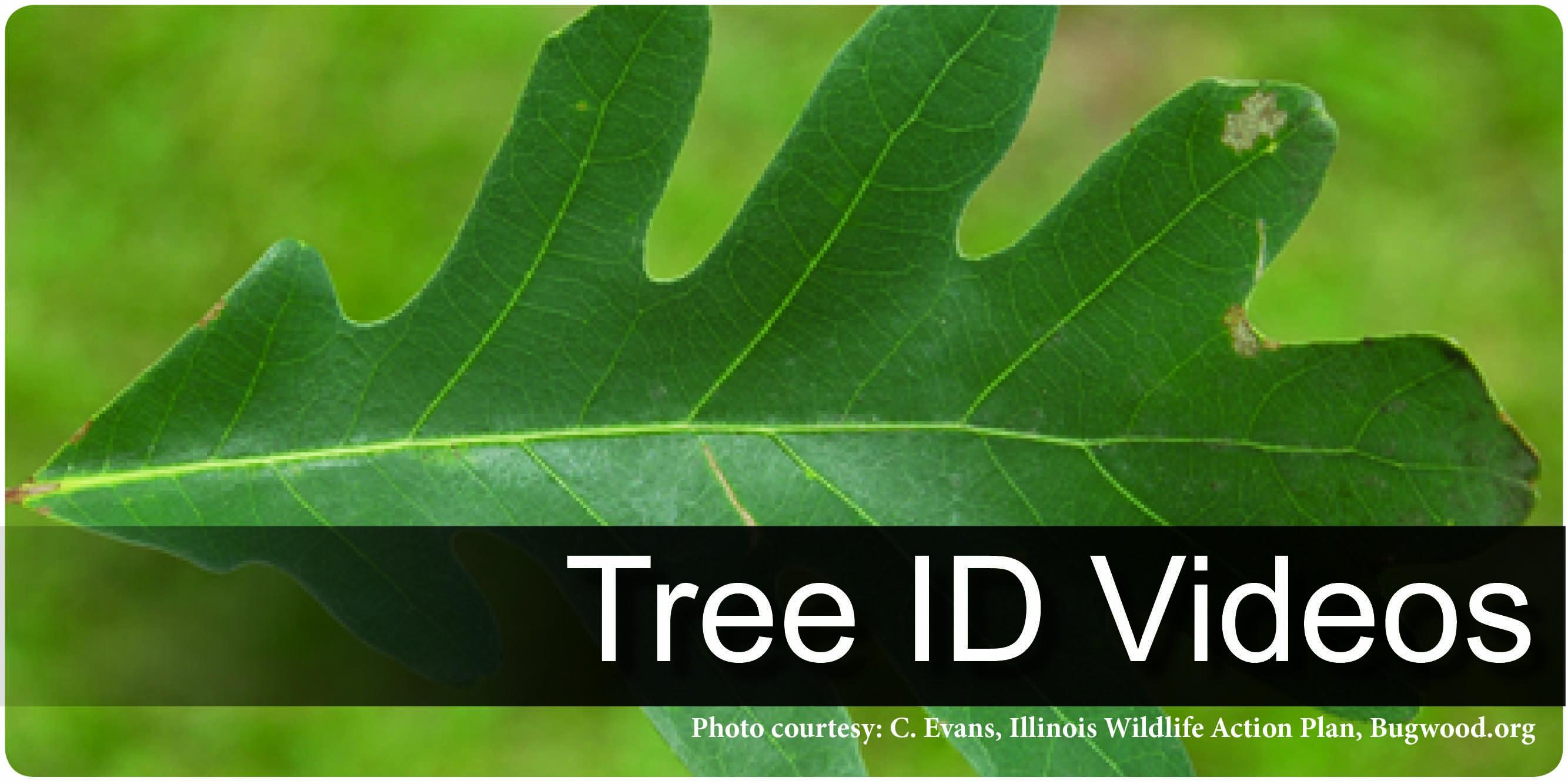 How to Identify Tree Videos
