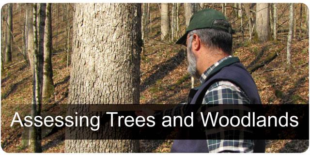 Assessing Trees & Woodlands