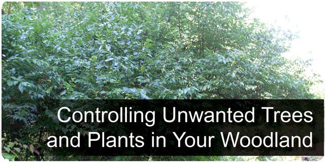 Controlling Unwanted Trees and Plants in Your Woodlands Section