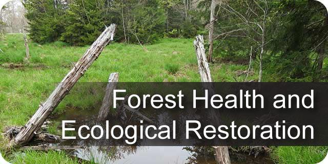 Forest Health and Ecological Restoration