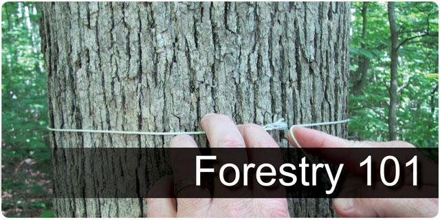 Forestry 101