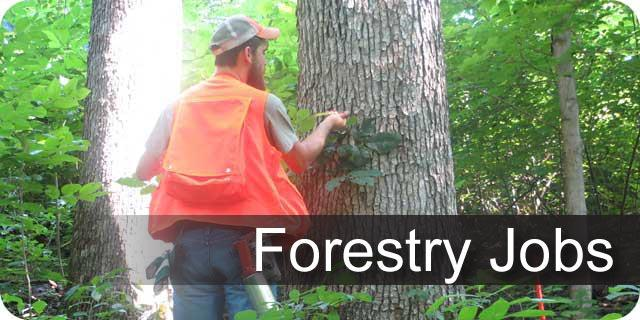 Forestry Jobs