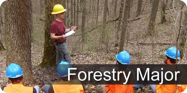 The Forestry major at UK