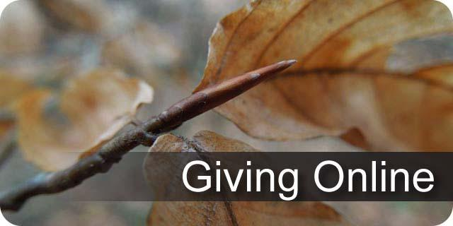 Information on giving a contribution online to UK Forestry