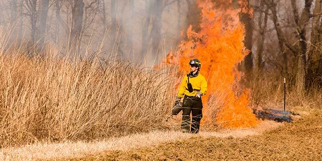 Photo of prescribed fire at Griffith Woods. Photo by Steve Patton