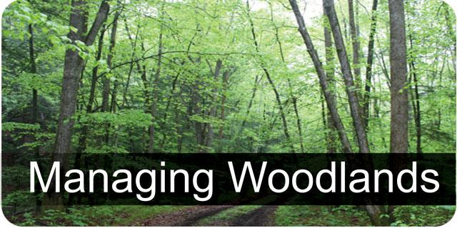 Managing Your Woodlands