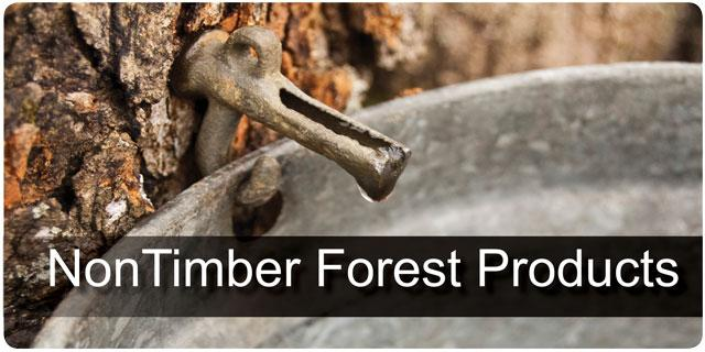 Non Timber Forest Products