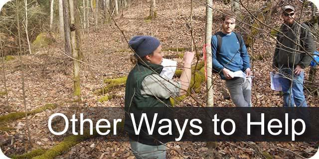 Information on other ways to support UK Forestry