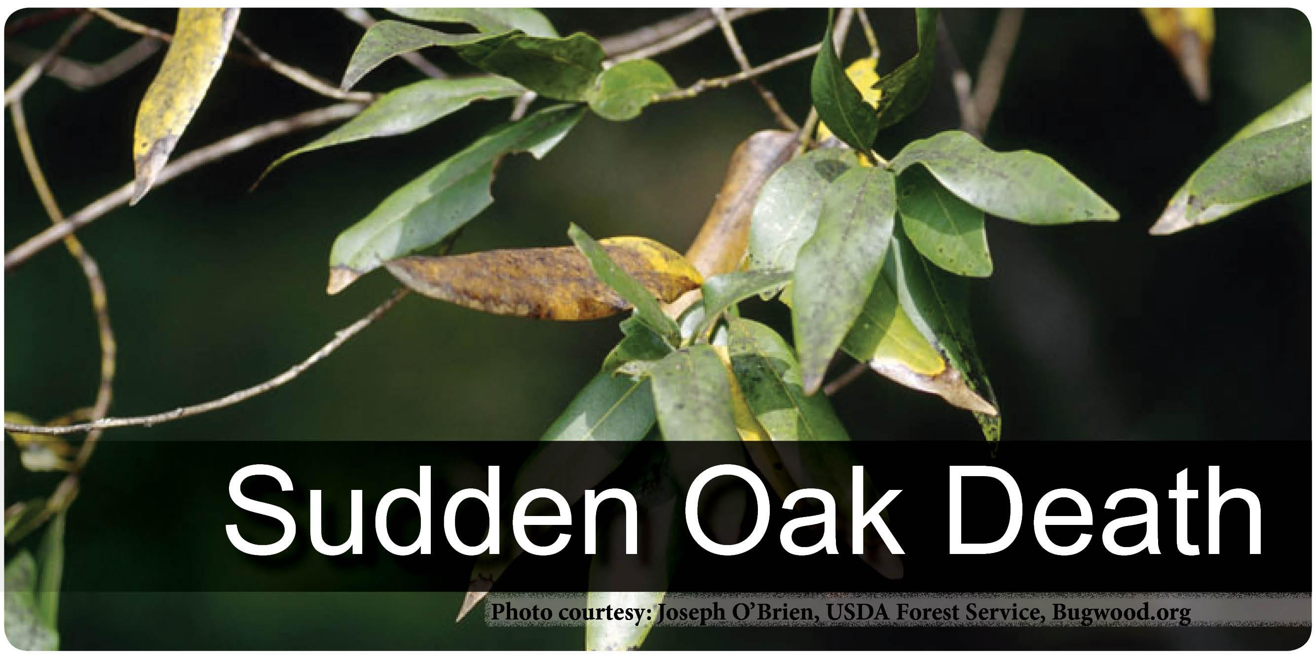 Sudden Oak Death