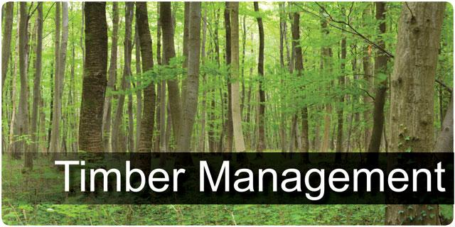 Timber Management
