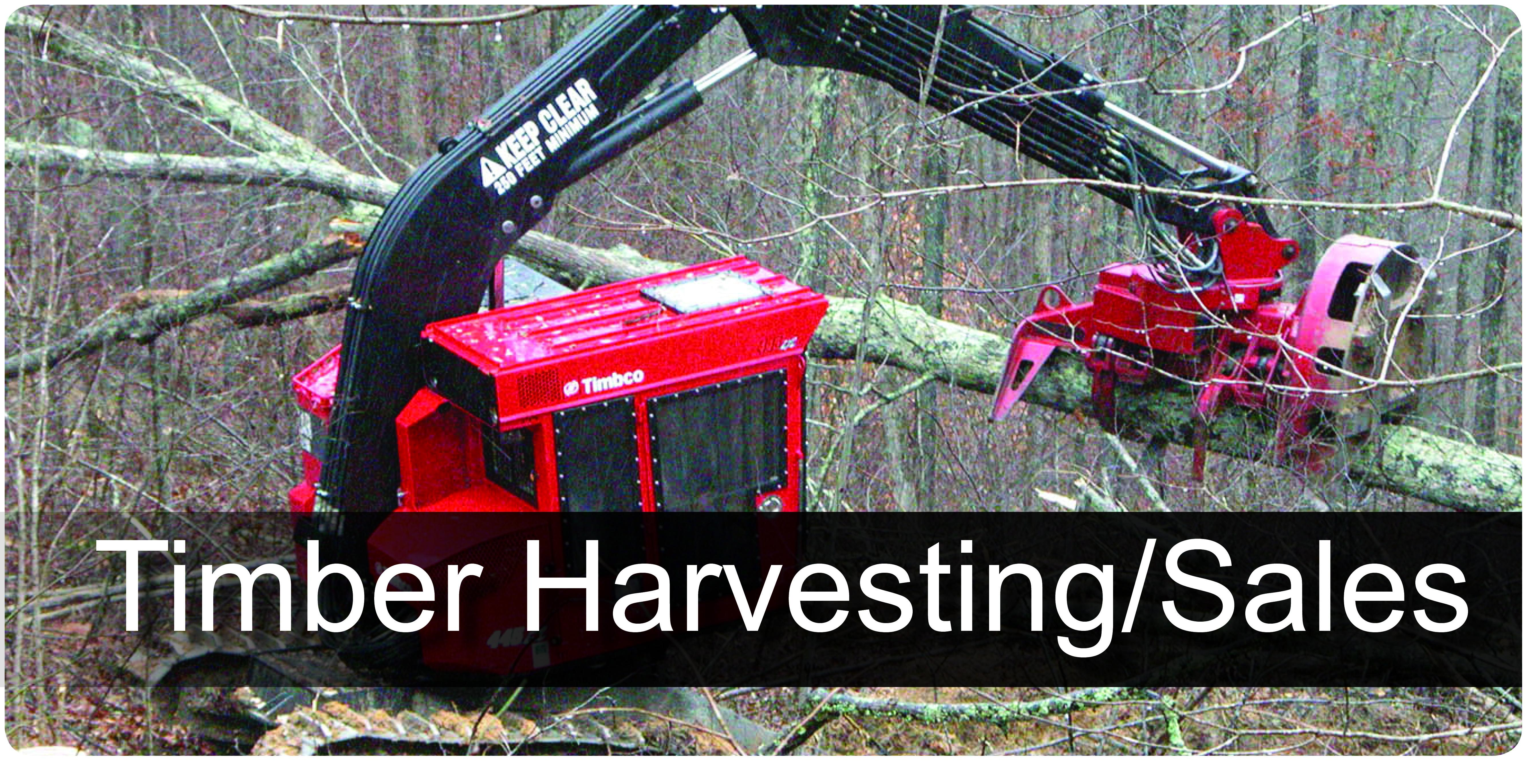 Timber Harvesting