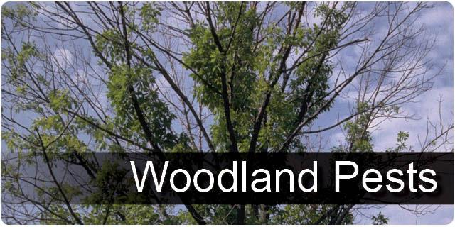 Woodland Pests