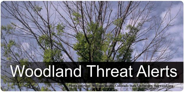 Woodland Threat Alerts