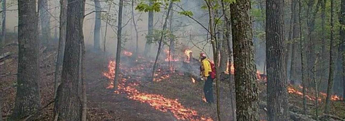 Photo of wildfire research