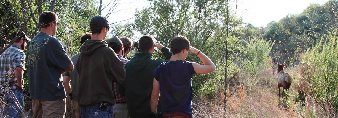 Photo of students watching elk.
