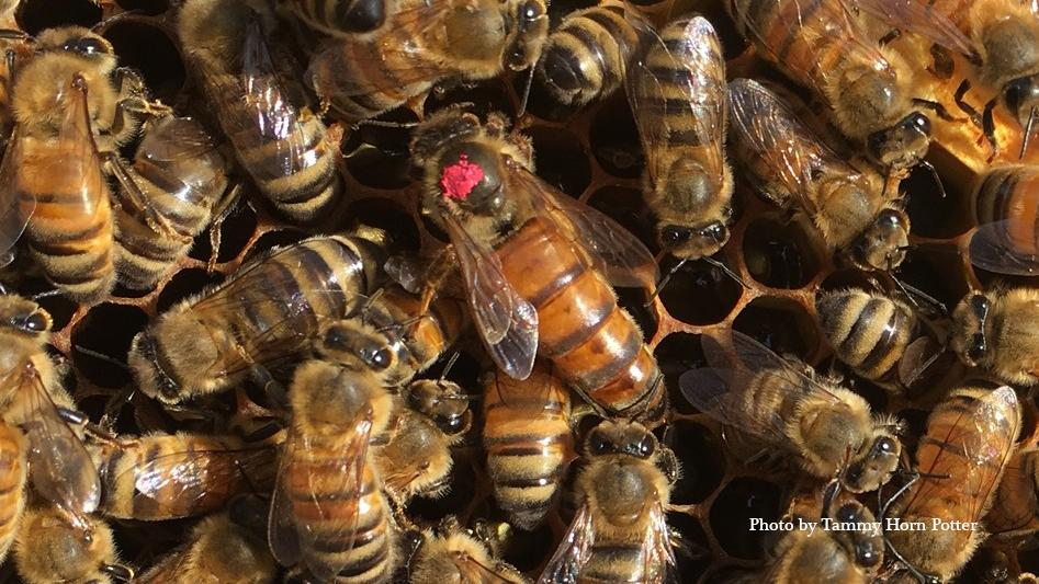 Photo of Bees by Tammy Horn Potter