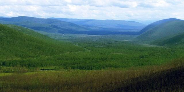 Photo of boreal forest