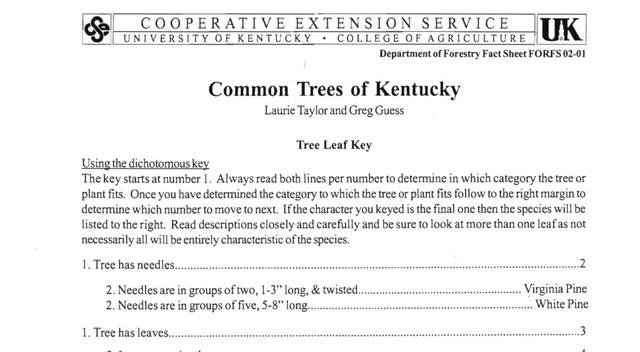 Common Trees of Kentucky