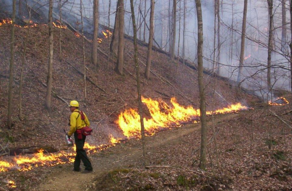 Photo of prescribed fire research
