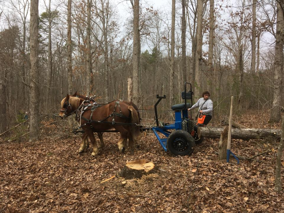 Photo of John Hite III, Berea College Horse Program Forest Technician