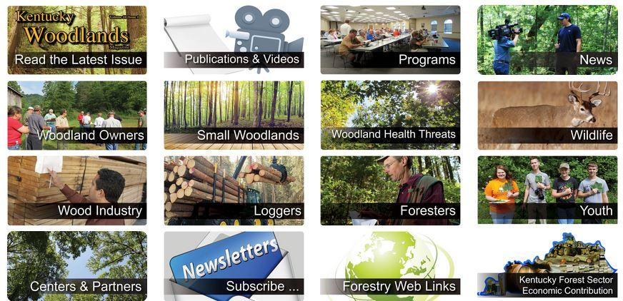 Photo of Forestry Extension Website