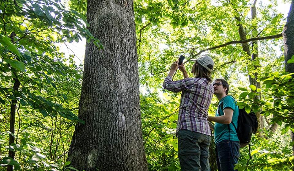 Photo of Ellen Crocker and Bradford Condon collect data from a tree using the TreeSnap app. Photo by Carol Spence