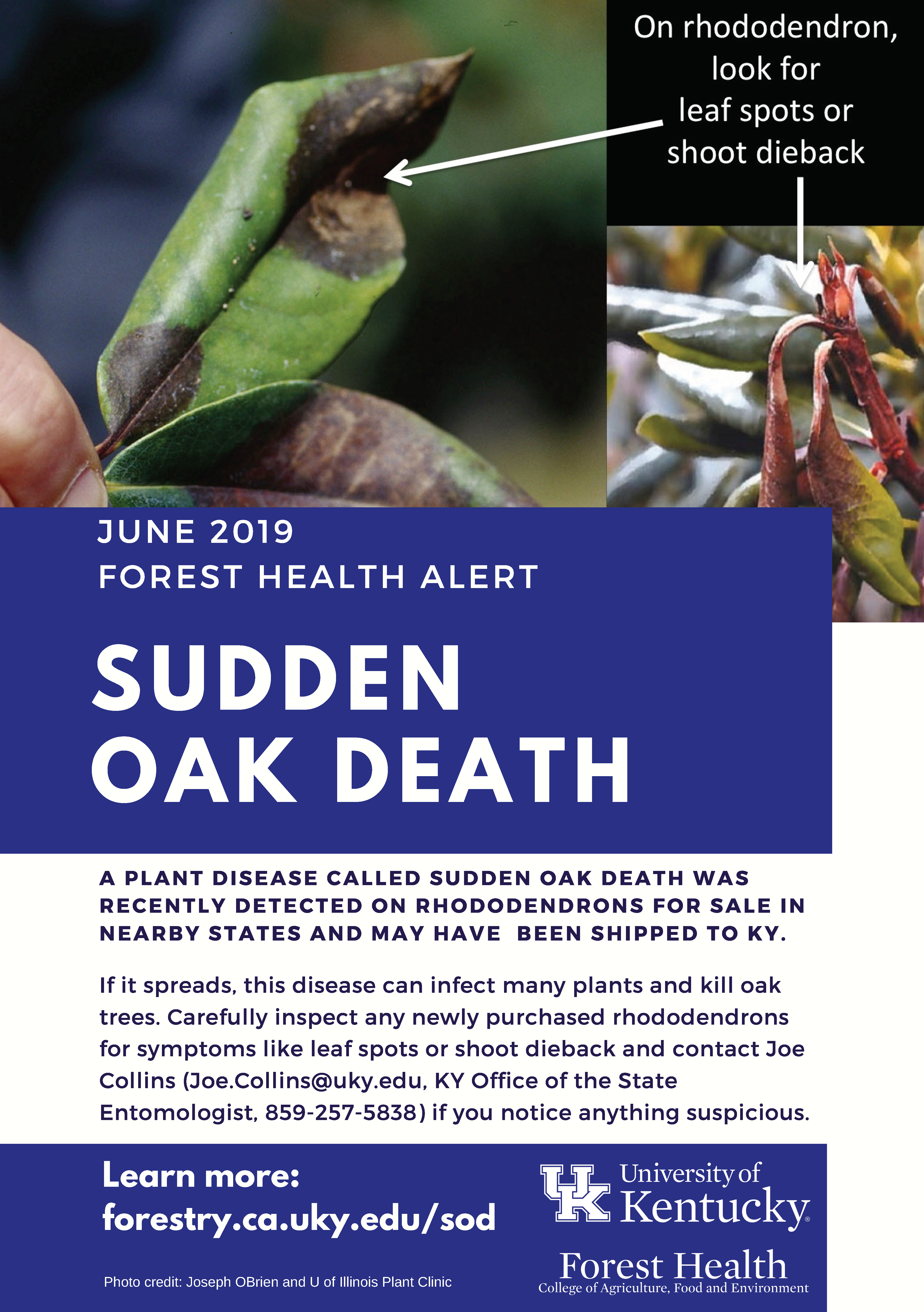 Sudden Oak Death Health Alert