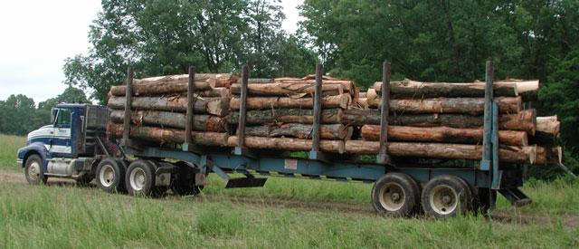 Timber Sales | Forestry and Natural Resources
