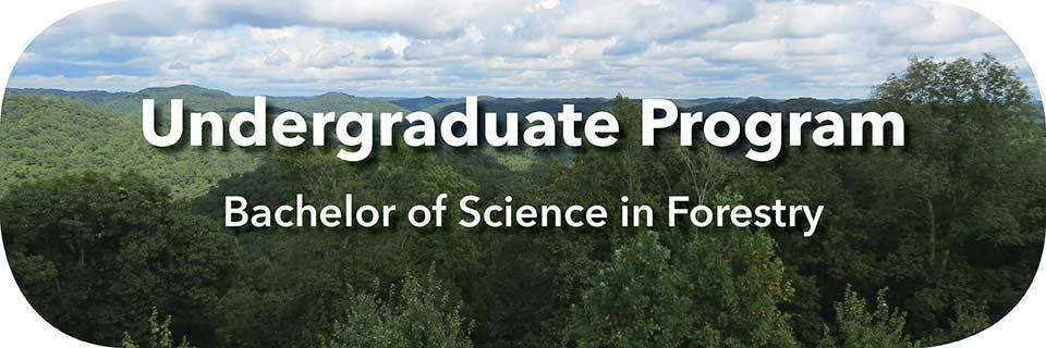 Link to Undergraduate Forestry - B.S. in Forestry