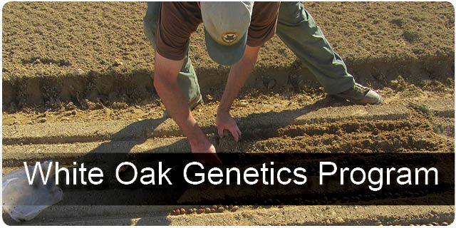 White Oak Genetics Program