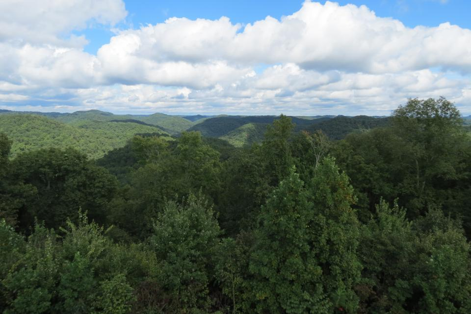 Robinson Forest - View from the Fire Tower