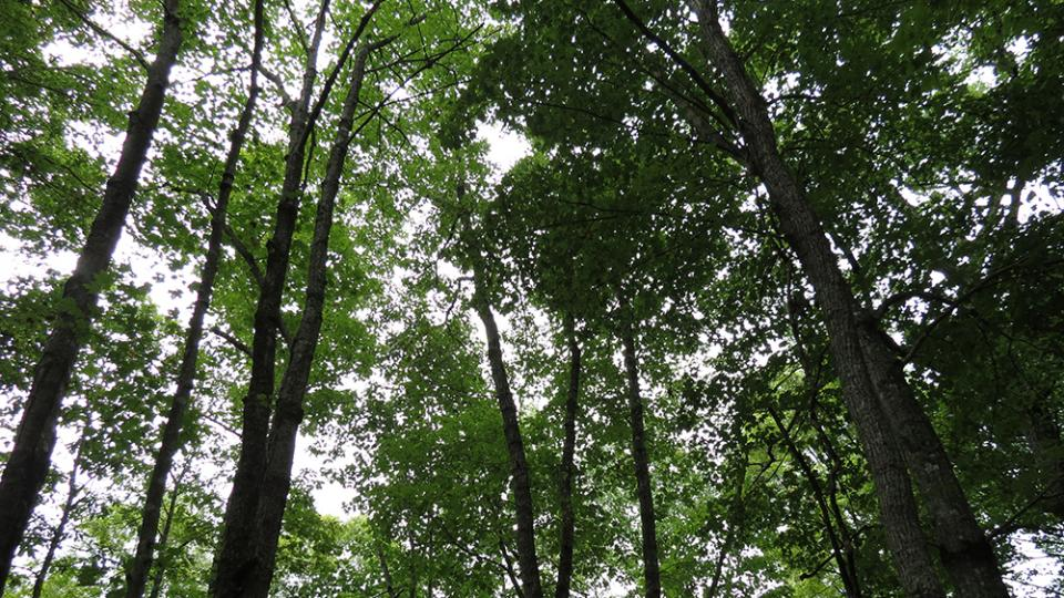 Photo of trees in Robinson Forest