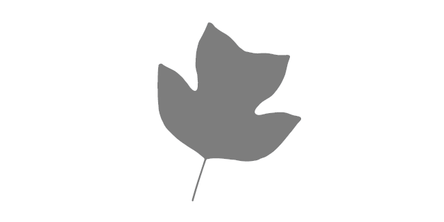 The State Tree of Kentucky - Liriodendron tulipifera