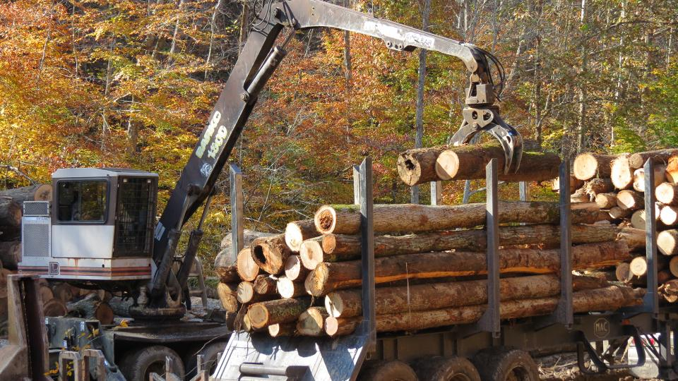 Photo of timber harvest